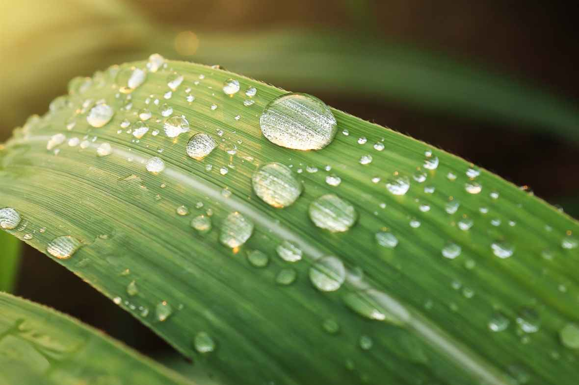 beautiful clean close up dew